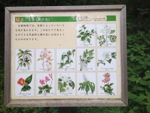 京都御苑 樹の花案内