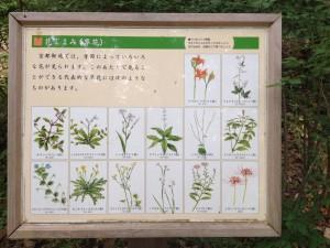 京都御苑 草花案内