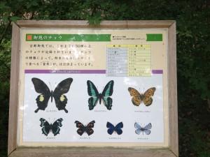 京都御苑 蝶々案内