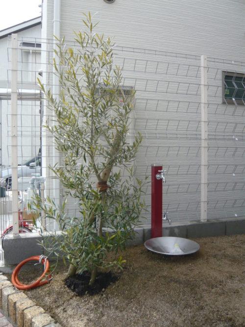 オリーブ 赤い立水栓 大阪