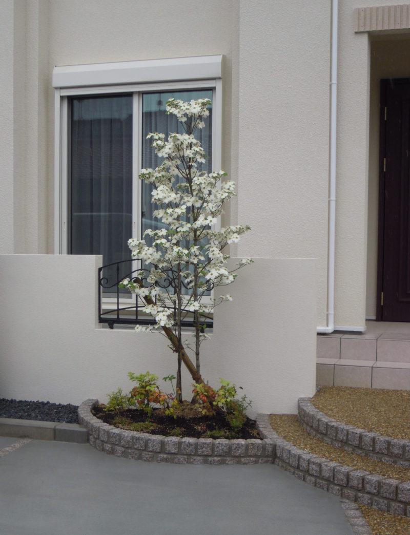 ハナミズキ シンボルツリー