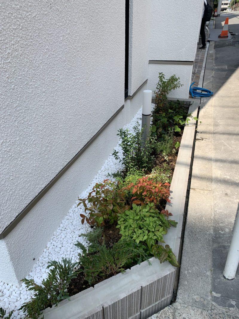 ミニガーデン 建物脇の植え込み