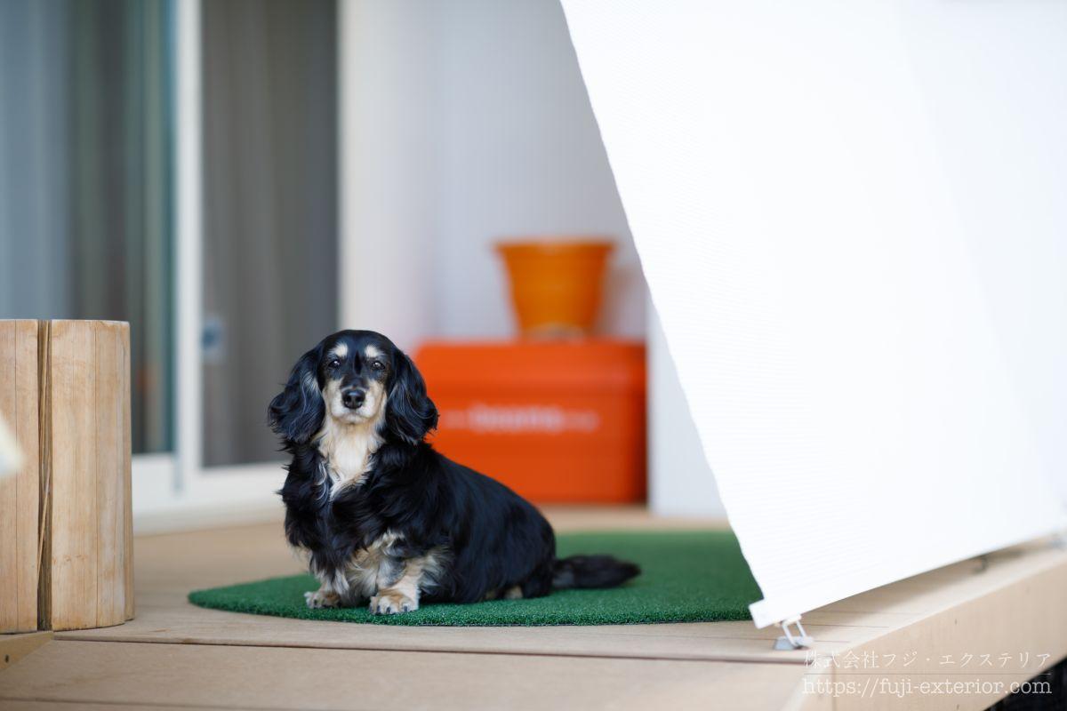 人工芝 犬用マット ミニチュア ダックスフンド ウッドデッキ